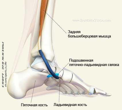 Тендинит сухожилия задней большеберцовой мышцы | Sustav.pro